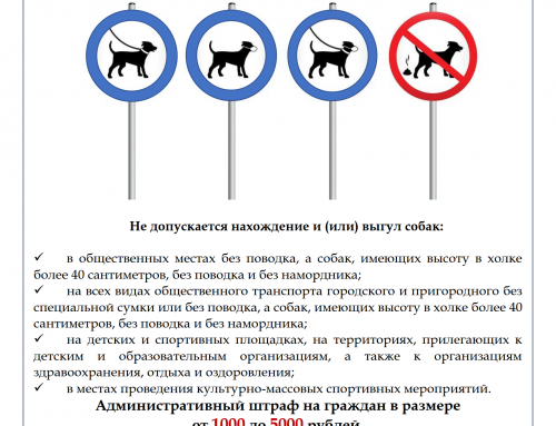 Нарушение правил содержания собак!